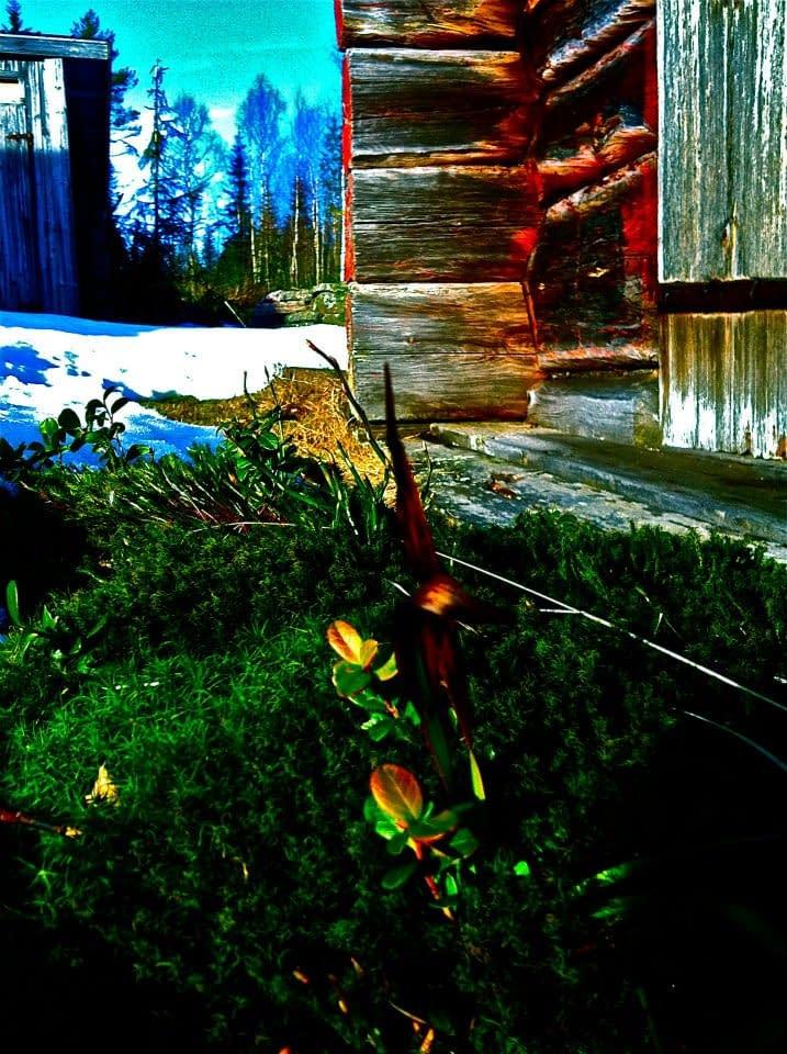 Timmerväggen och grönskande mark
