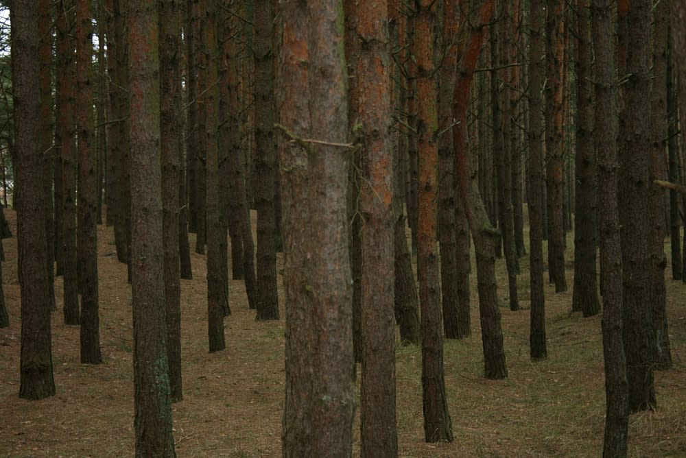 Latvia forest