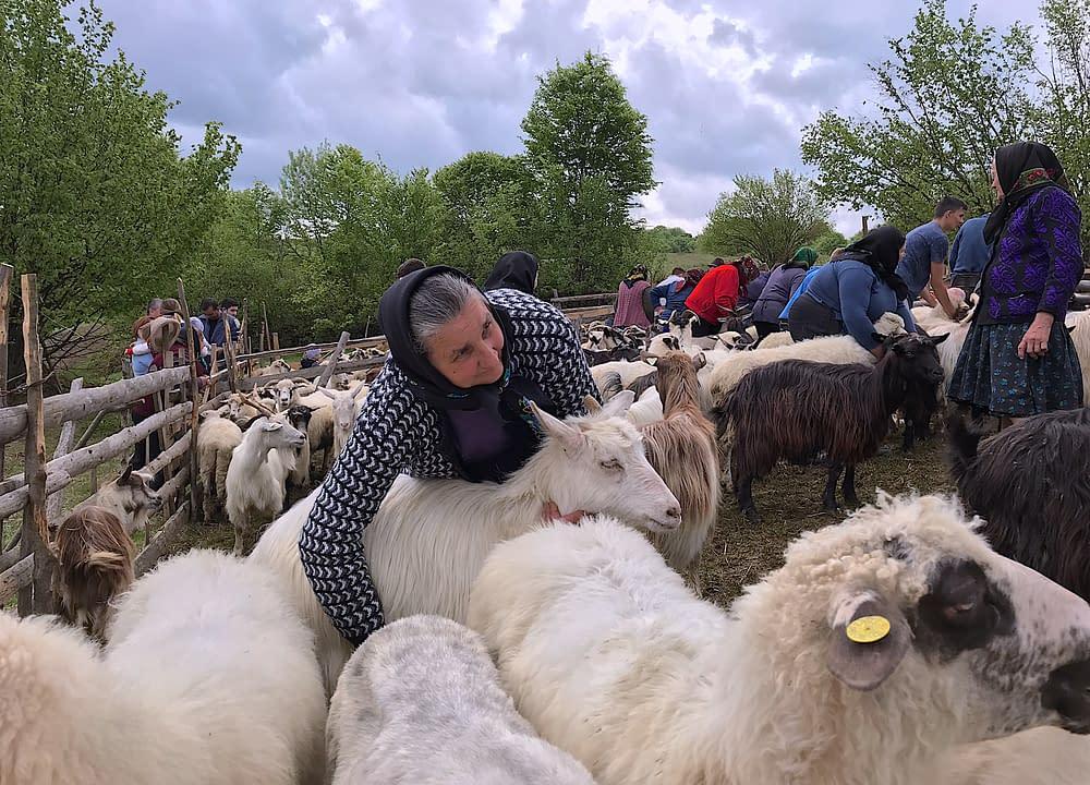 Eco farmers in Tara Lapusului