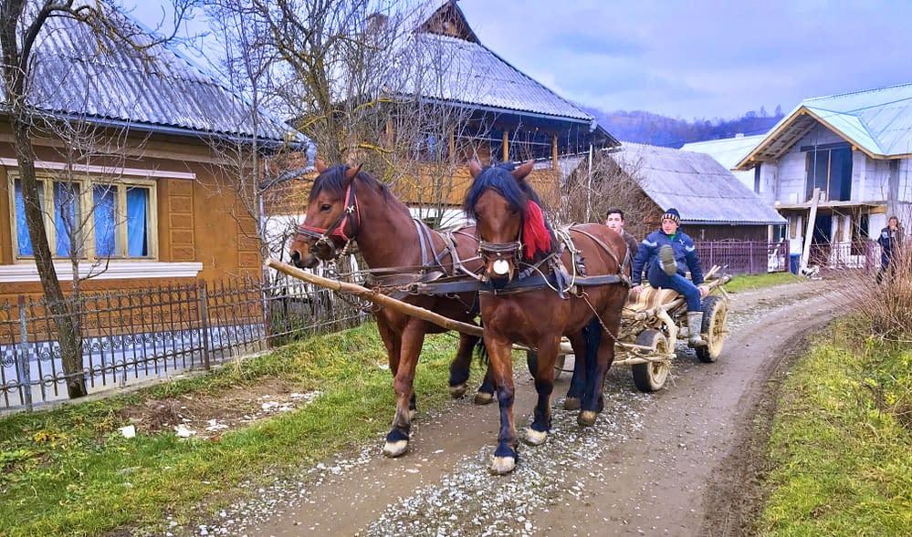 Cupseni horses, Carpaths, Romania. Photo Malin Skinnar