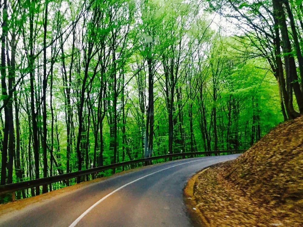 Bokskog bilväg