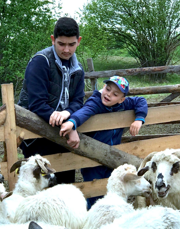 Sheep farmer families, Romania