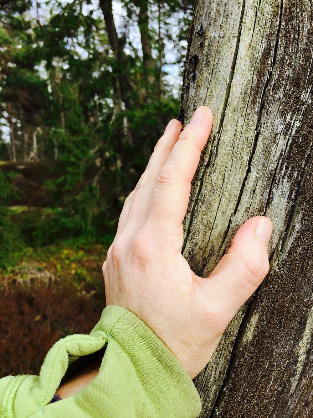 Handen mot gammalt träd