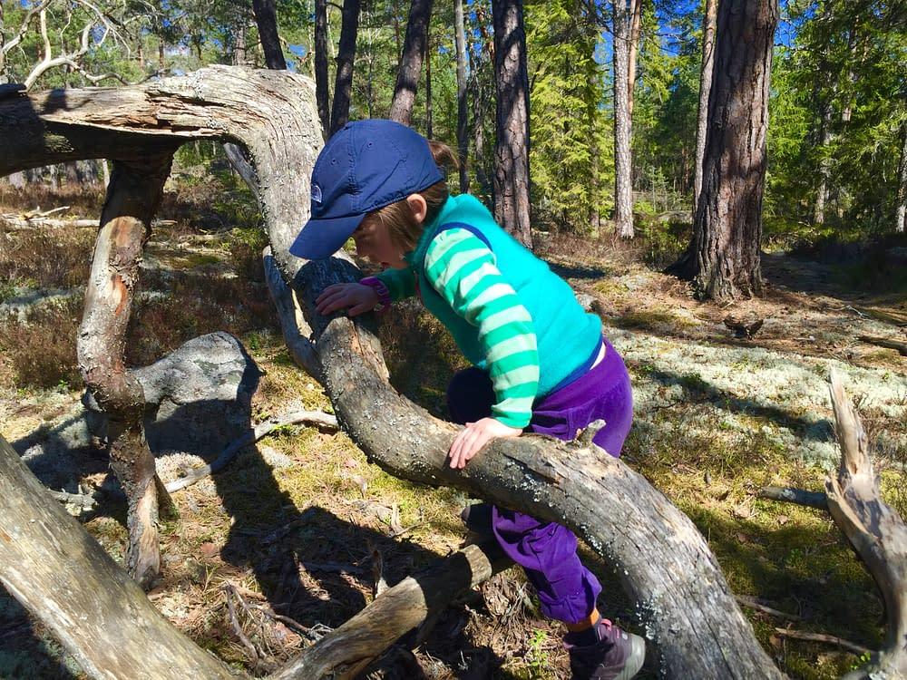 Tyresta Nationalpark skapar livets lekrum.