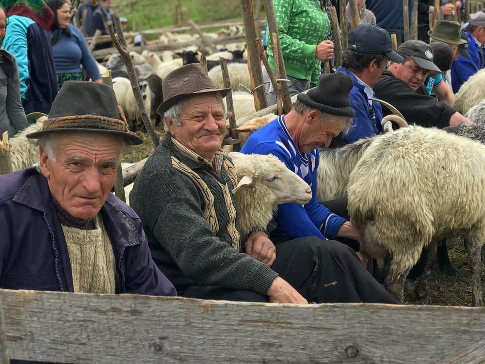 Cupseni, godpodar, sheep farmers