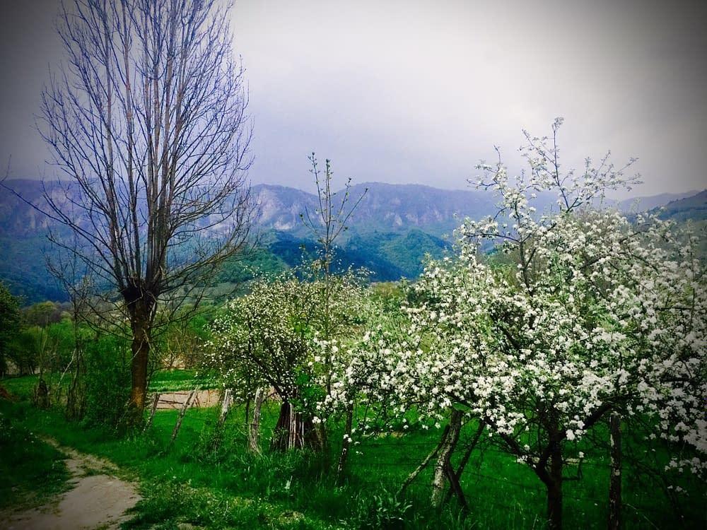 Äppelträden blommar i i byar som ser ut att vara hämtade från Bröderna Lejonhjärta.