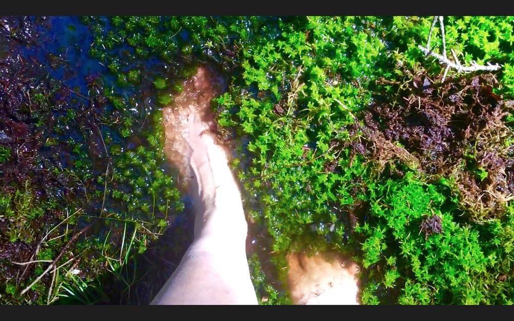 Kärleksvisa från skogen