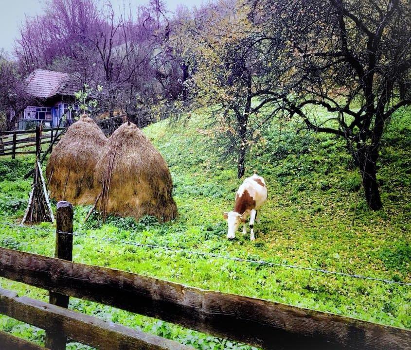 Oktoberregn i norra Rumänien