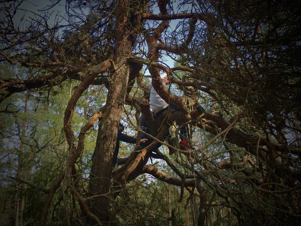Att klättra i träd naturreservatets träd bör vara alla barns rättighet.