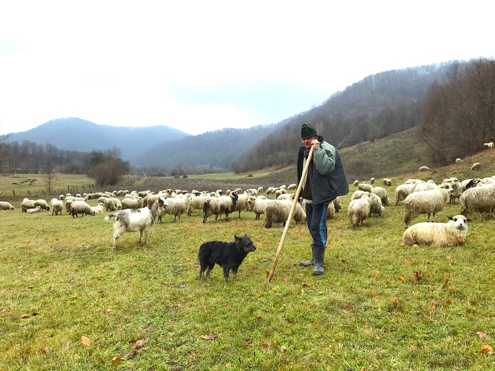 Travel to Romania and meet the shepherd's in Tara Lapusului