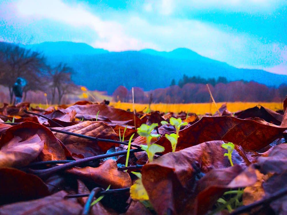 Romanian nature at autumn