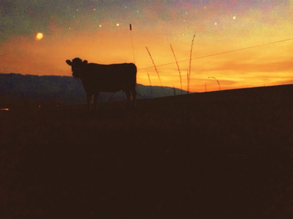 Självhushållarna har alla en ko var.