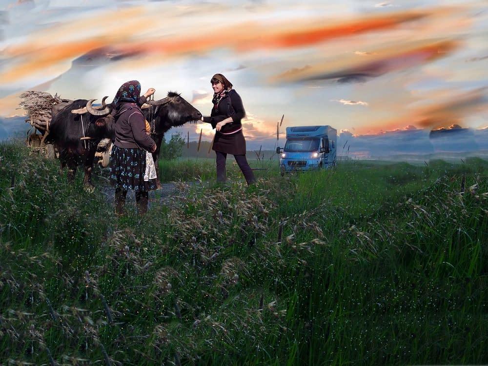 Husbil möter oxar på väg i Rumänien