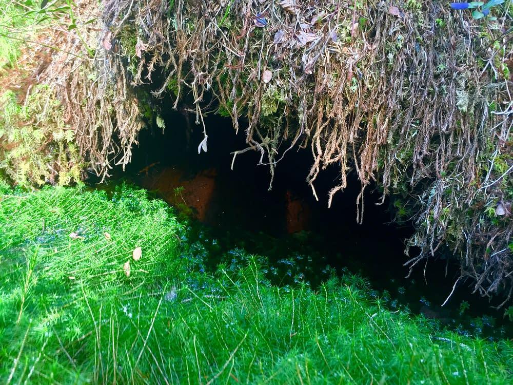 Tyresta Urskog Mossen hålet